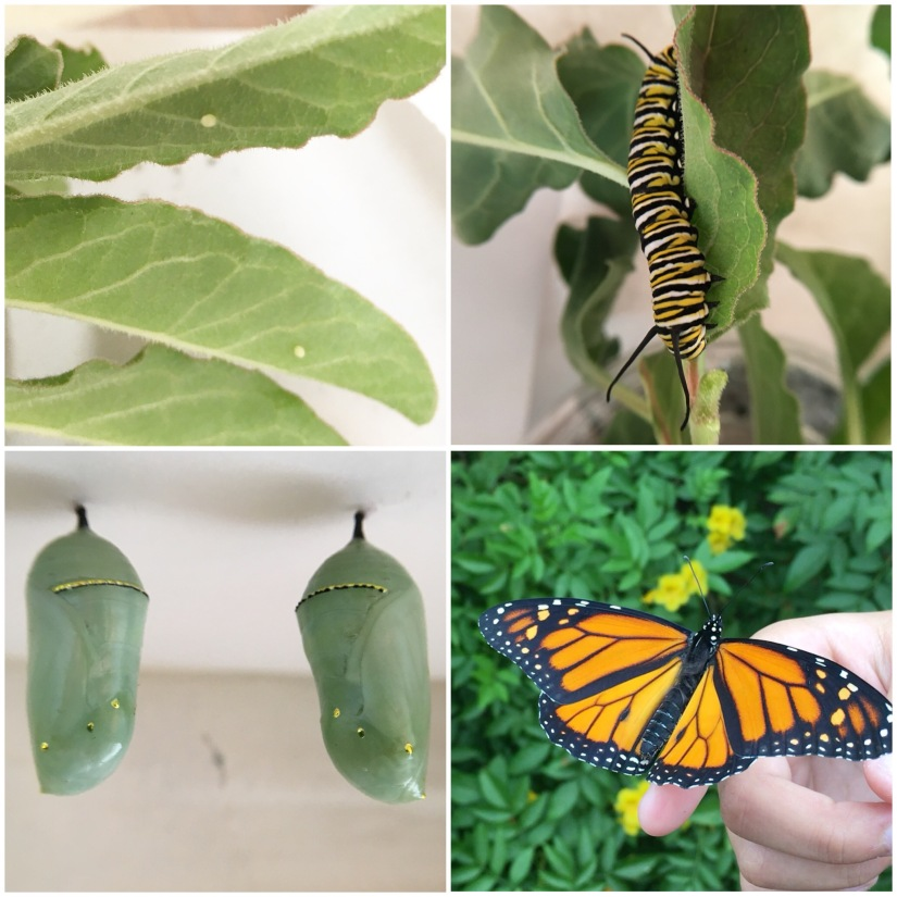 Monarchs and Milkweeds: Collaborative Collage