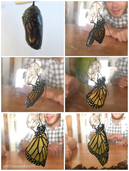 A collaborative art project that combines scientific observation of a monarch's life cycle with a group collage project.