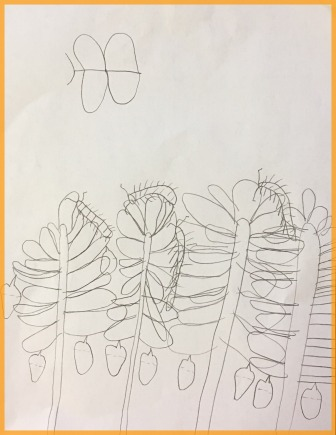 Inspired by observing our class caterpillars, students sketch a plan for their monarch artwork.